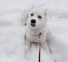 Anjing: