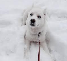 Cachorro: