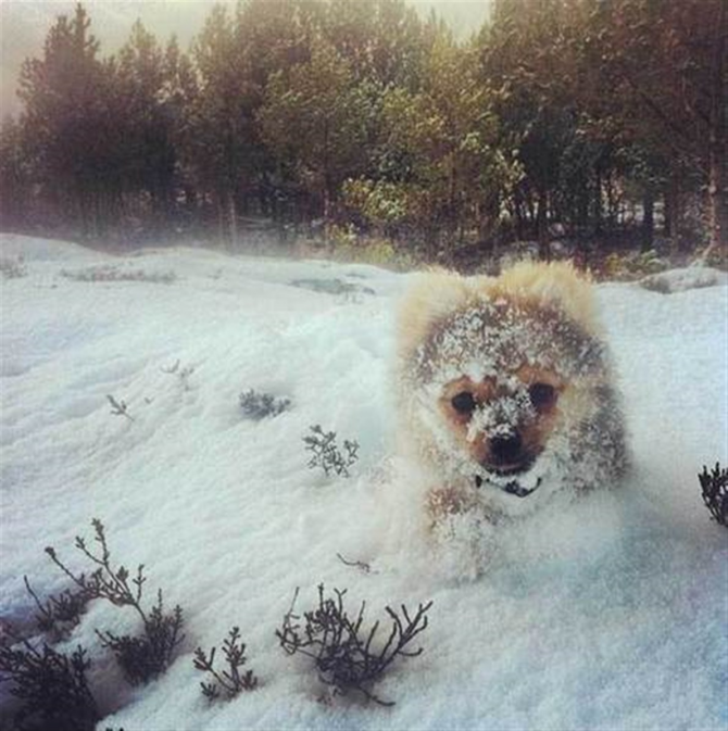 hund: