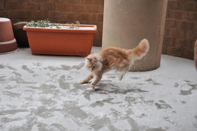 Kucing: