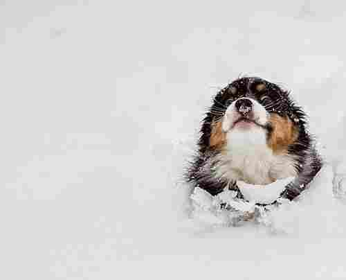 Perro: