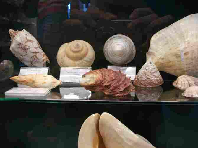 Arica Sea Museum