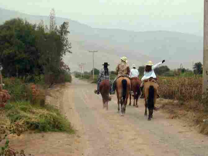 Valleys of Lluta and Azapa