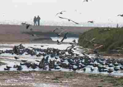 Wetland Río Lluta
