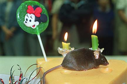 The Cumulina Mouse