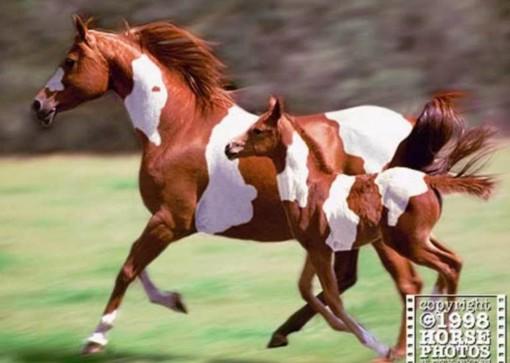 Краска Лошадь.
