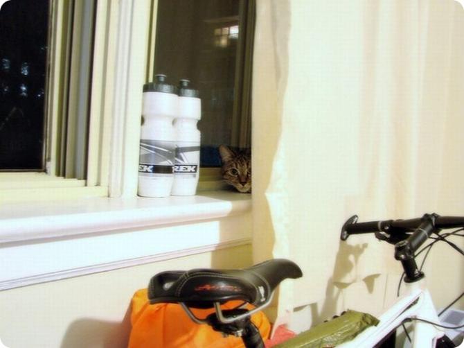 I dag kommer han inte att sätta mig i cykelkorgen