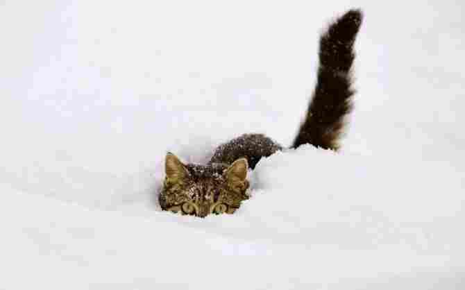 Om du visste kylan som jag går igenom så att de inte ser mig ...