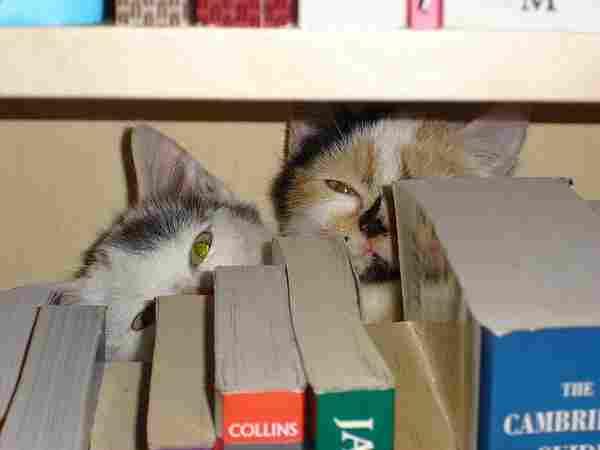 Säg inte meow!