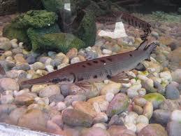 Великолепная рыба
