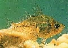 Хрустальная рыба
