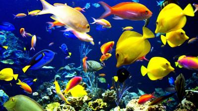Os melhores peixes para um aquário de água doce