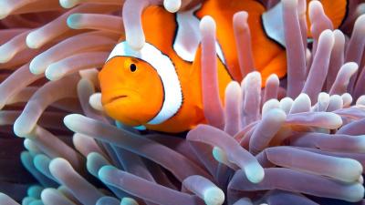 Il pesce più bello del mondo