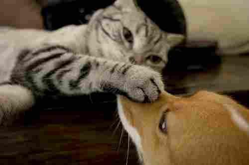 Bilder av kärlek mellan hundar och katter
