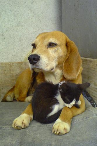 Imágenes de amor entre perros y gatos