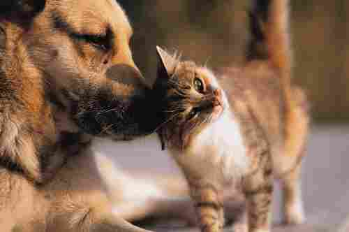 Images of love between dogs and cats