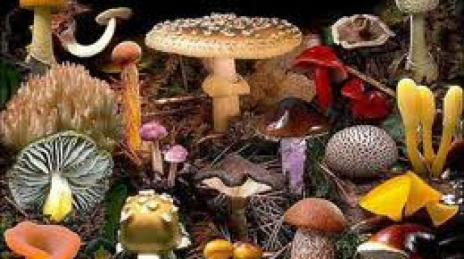 The 6 most poisonous mushrooms in the world