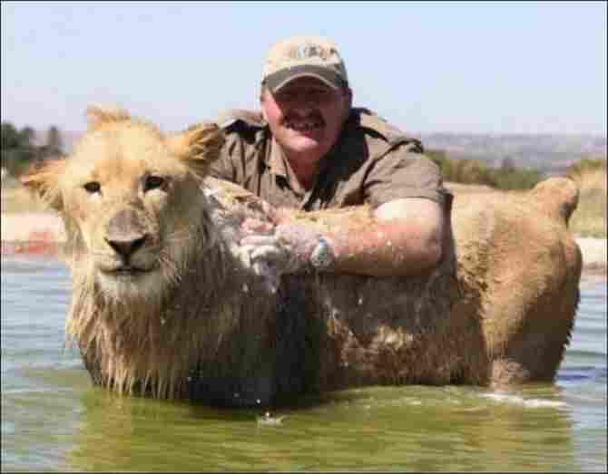 Hôm nay là thời gian để tắm cho sư tử