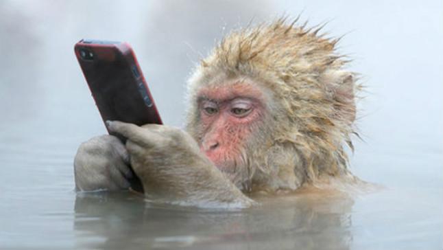 'Ni aquí me dejan tranquilo' - Mono y chat