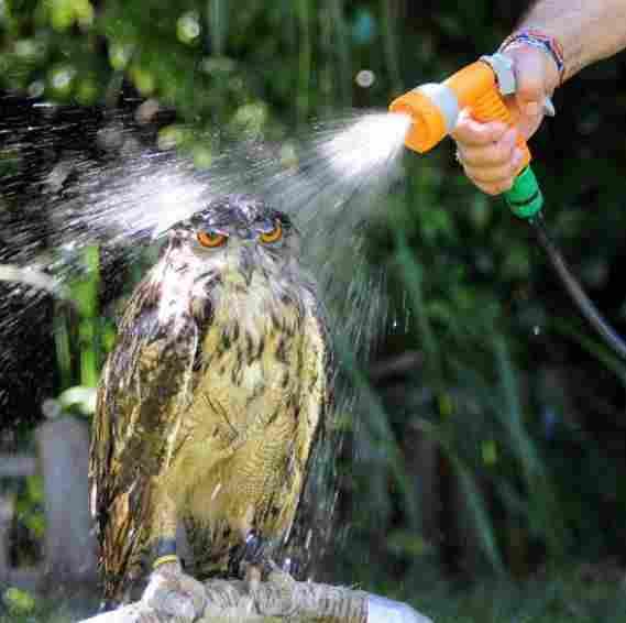 Tắm phản bội