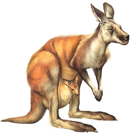 Kangaroos do not produce methane, the characteristic gas of the flatulence of other animals.