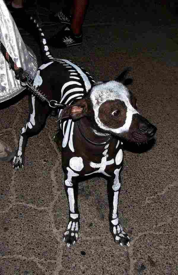 El perro esqueleto
