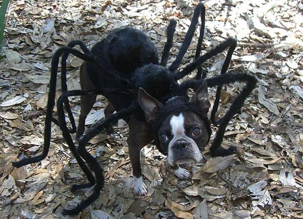 El perro tarántula