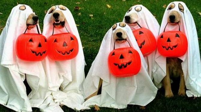 Kostum Halloween anjing terbaik
