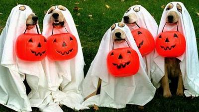 Kostum Halloween terbaik untuk anjing