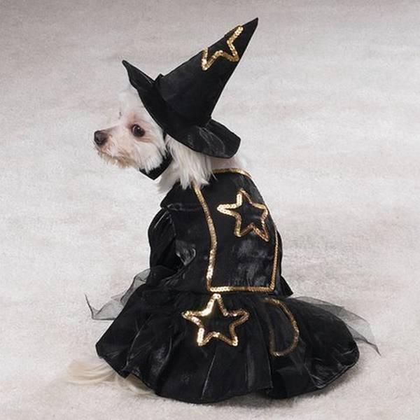 la bruixa