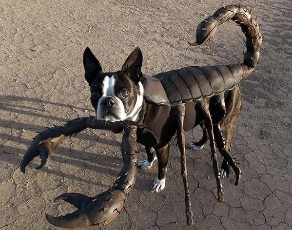 Le chien scorpion