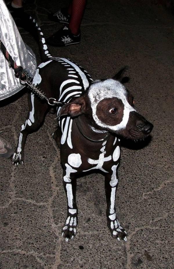Le chien squelette