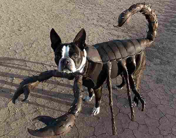 The scorpion dog