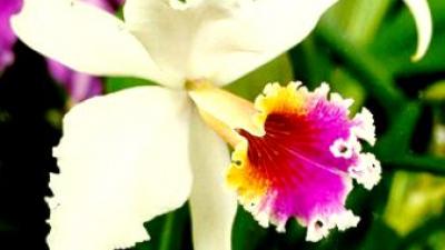 Flores nacionais da América Latina