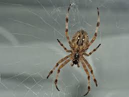 Падение паука
