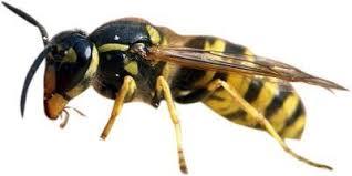 Пчеловодство
