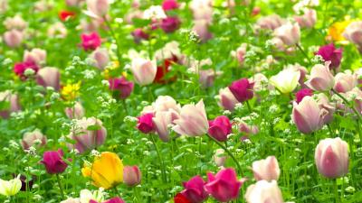 Имена людей, полученные из названия цветов