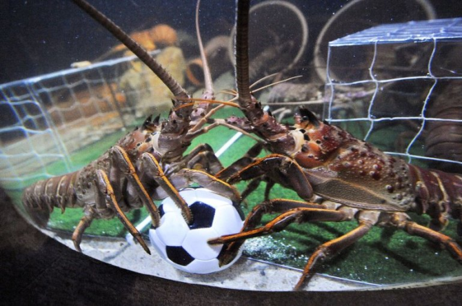 Lobster footballers