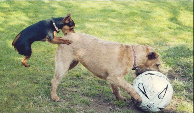 !Referee!