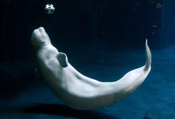 Undervattensfotboll