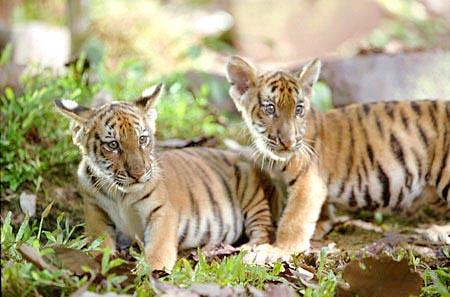 Kumal and Sangha (Two brothers)