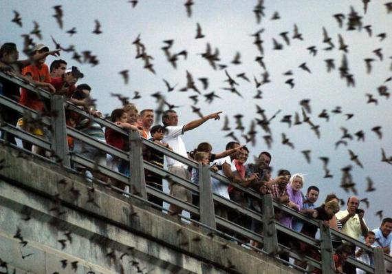 Bats in Texas (United States)