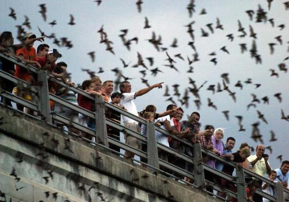 Morcegos em Texas (Estados Unidos)