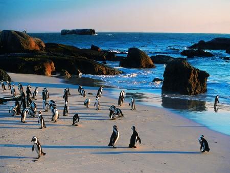 Pinguins em uma praia africana (África do Sul)