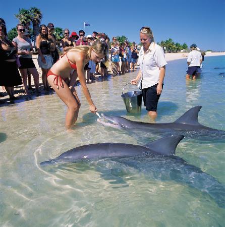 Praia dos Golfinhos (Austrália)