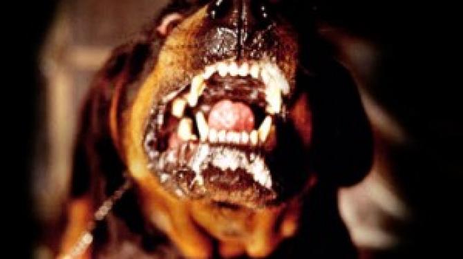 As raças de cães mais corajosas e fiéis