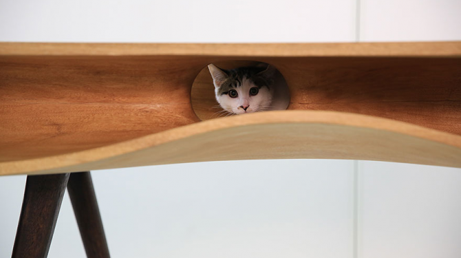 Bra möbler för kattälskare