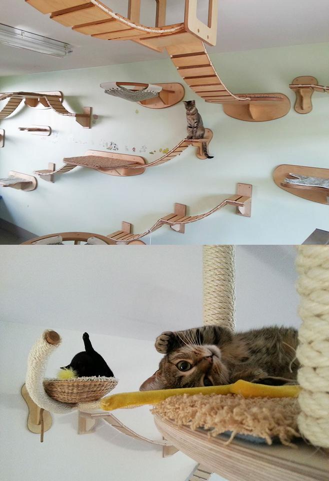 Dach bardzo przystosowany dla kotów