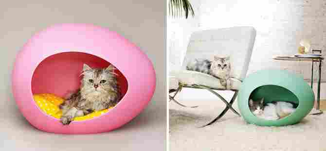 Egg for cats