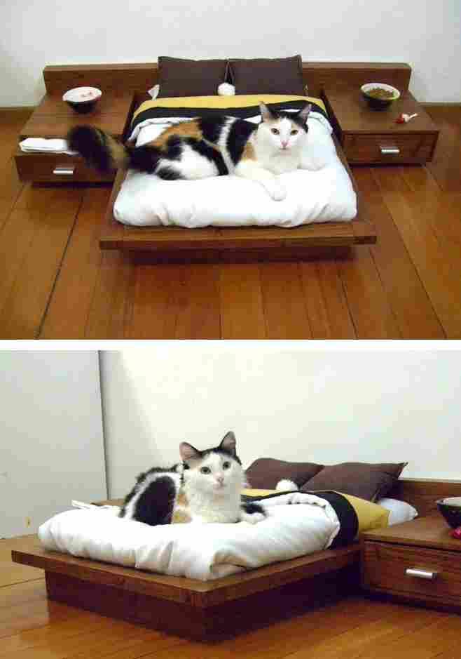 Feline scale room